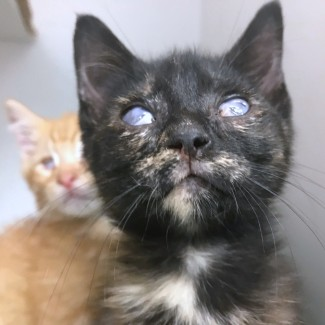 These adoptable floofs at Morris Animal Refuge have AI-generated