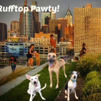 Image of dogs on the Cira Green Rooftop overlooking the city
