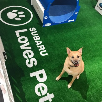 Dog next to  sign labeled Subaru Loves Pets