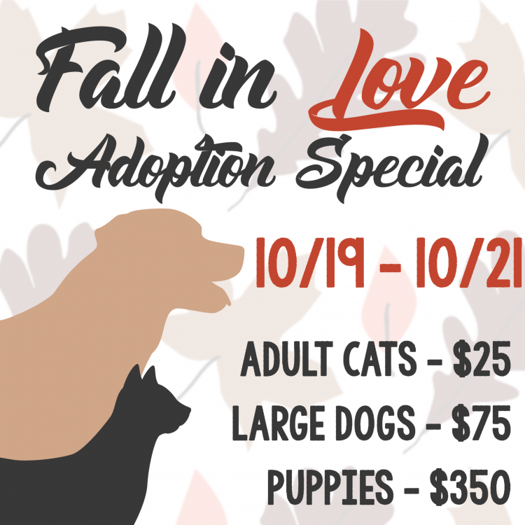 Fall Adoption Special