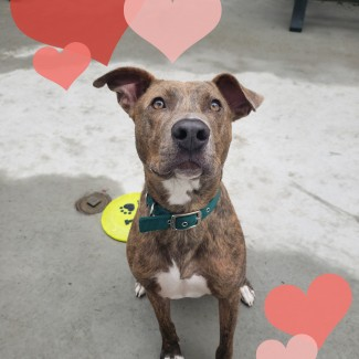 A brown and orange mix dog surrounded by cartoon hearts