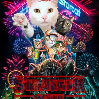 Stranger Cats adoption special graphic