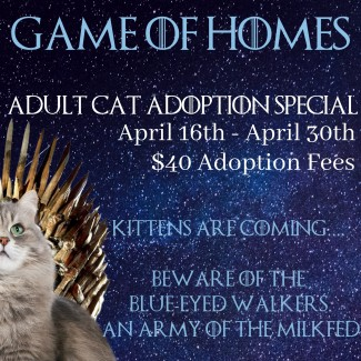 Game of Homes Cat Adoption Special